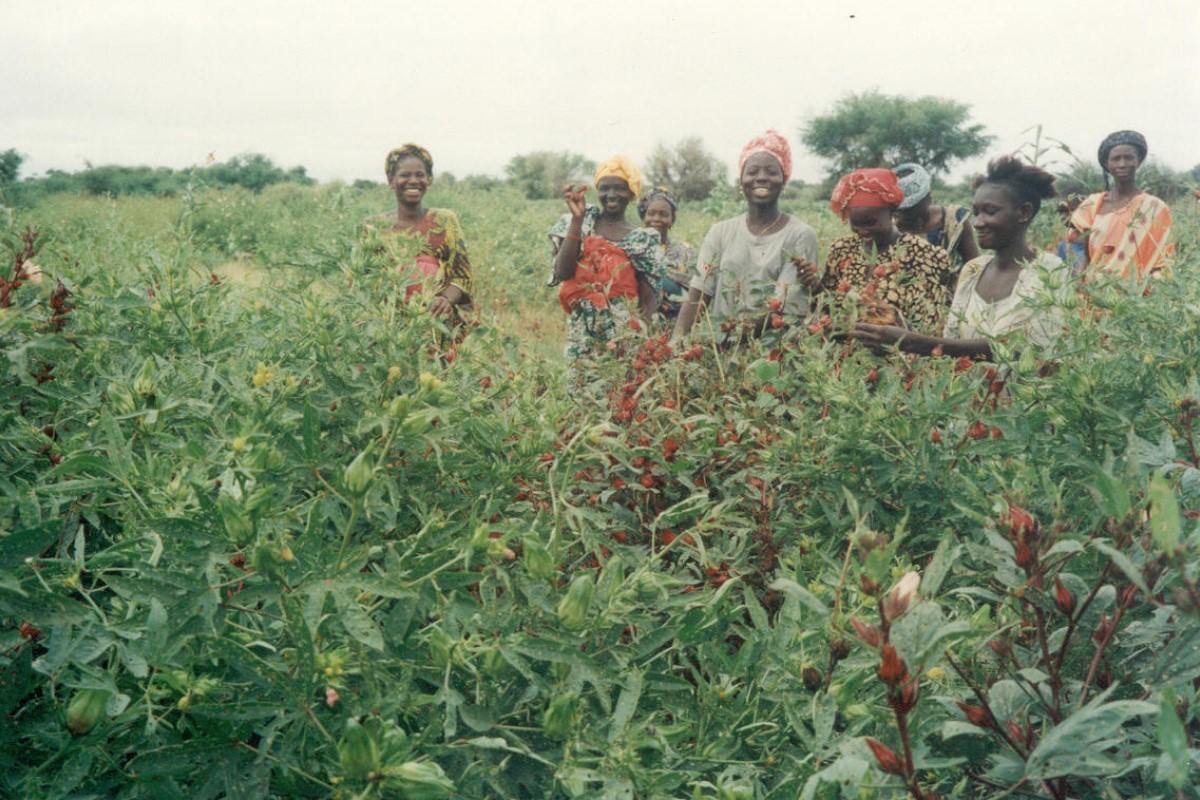 Gestion medioambiental Mauritania