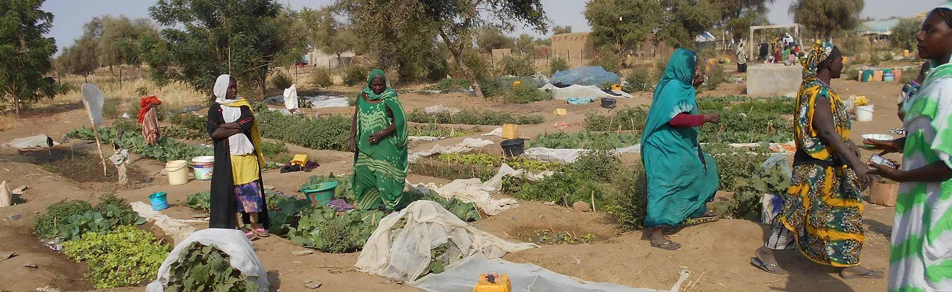 mauritania_perimetro agricola mujeres